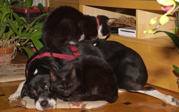 Με λίγη εκπαίδευση θετικής επιβράβευσης γάτες και σκύλοι συμβιώνουν αρμονικά. Το ίδιο και με τις ορχιδέες.