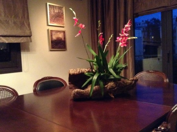 orchids on virgin cork