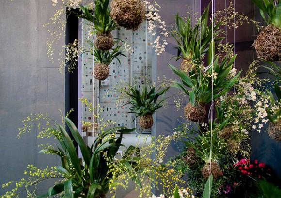Κρεμαστοί κήποι κοκεντάμα με ορχιδέες ονσίντιουμ.